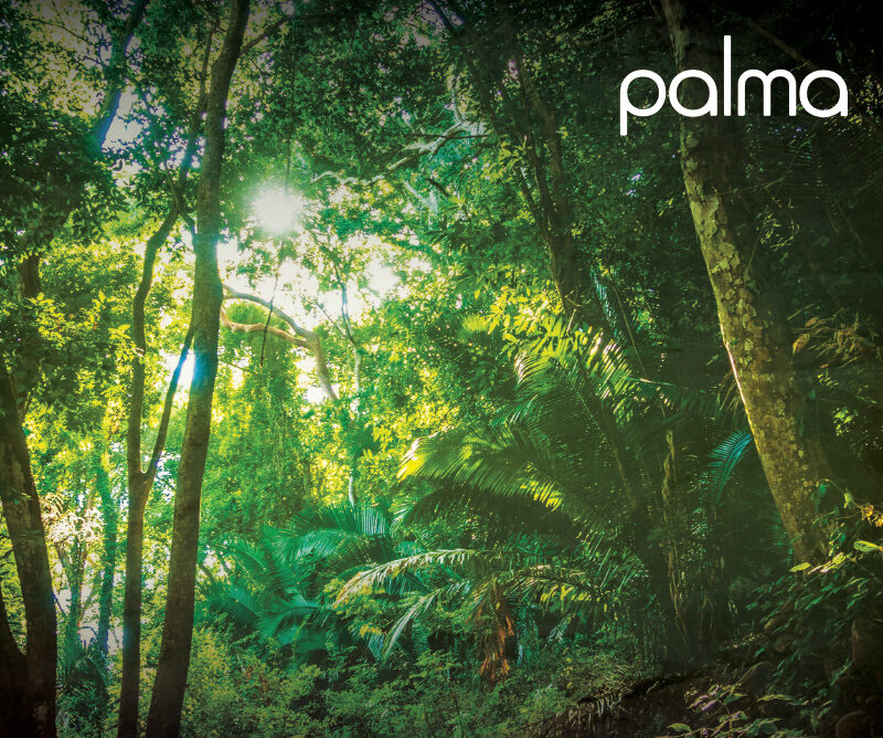 LISTEN: Palma Releases New Melodic House Single 'Crisp Air'